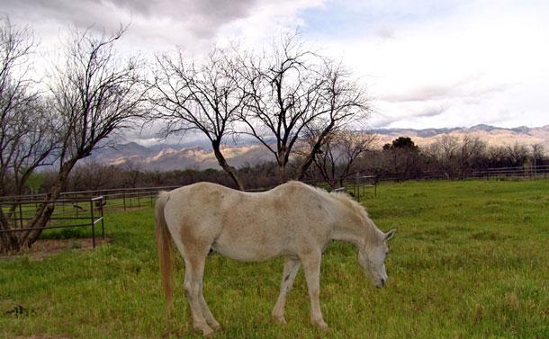 Tucson AZ Horse Property